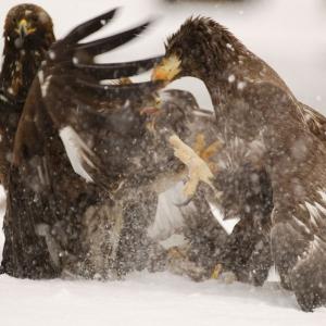 Birds of Kamchatka