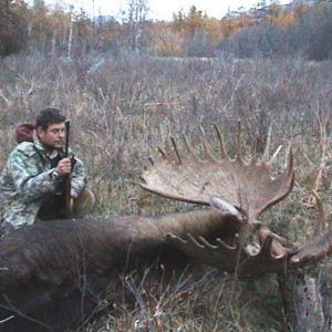 Trophies - moose