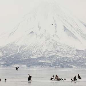 Birds of Kamchatka