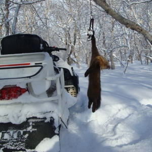 Winter Hunting